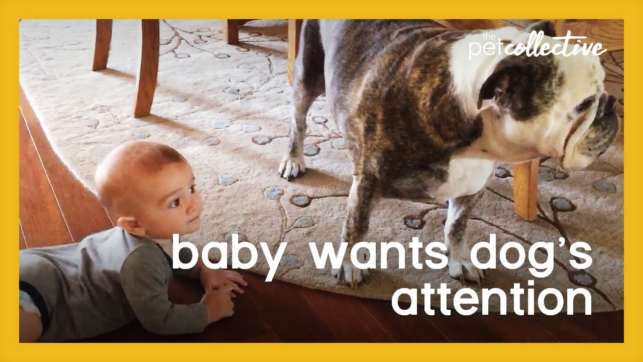 Baby Wants Dog's Attention