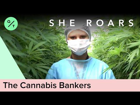 Banking On Colorado's Cannabis Cash   She Roars