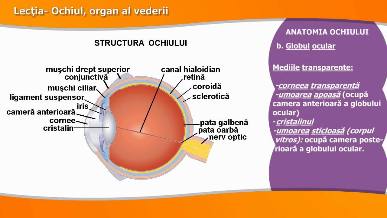 lecție de ochi și vedere vederea s-a deteriorat după forumul nașterii
