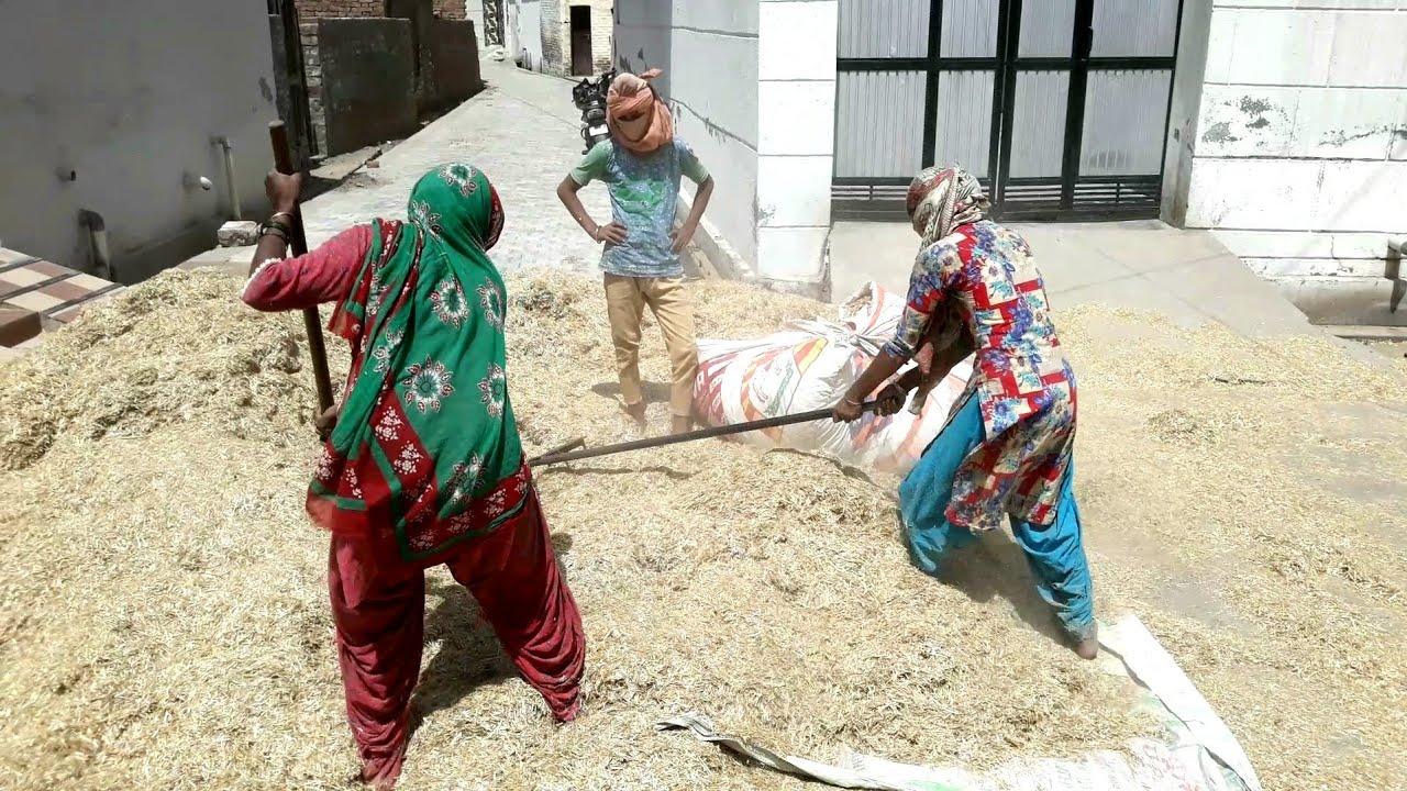 Village life in Punjab ( India) // Rural lifestyle in Indian ...