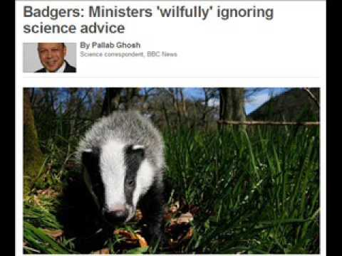ANARCHIST BADGERS!