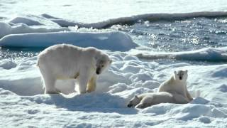 To the Arctic - Meryl Streep Featurette