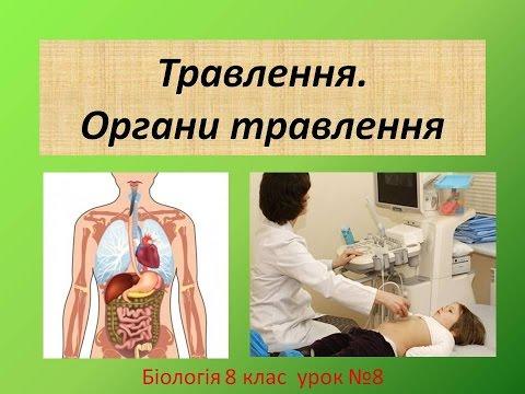 Строение внутренних органов человека