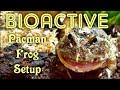 - BIOACTIVE Pacman Frog Setup