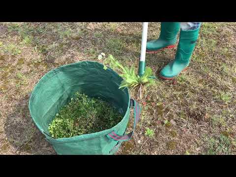 Easily Remove Weeds! Walensee Stand Up Weeder, Best weeder to Buy - Weed Pullers(2019)
