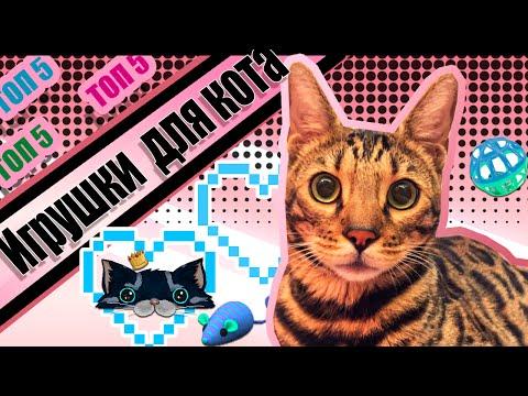 Как сделать красивую и мягкую игрушку для вашего кота своими руками?