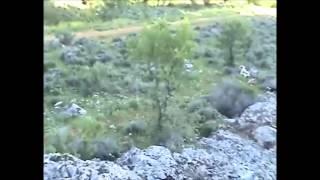 Κηνυγωντας με Beagle στην Κυπρο-beagle Hunting-training Cyprus Production