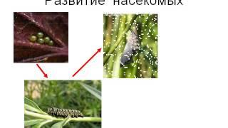 Презентация Размножение и развитие животных