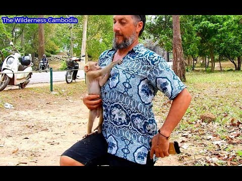 Surprise Axel Happy With New Friend | Abandoned Monkey Axel Happy With Western Guest.