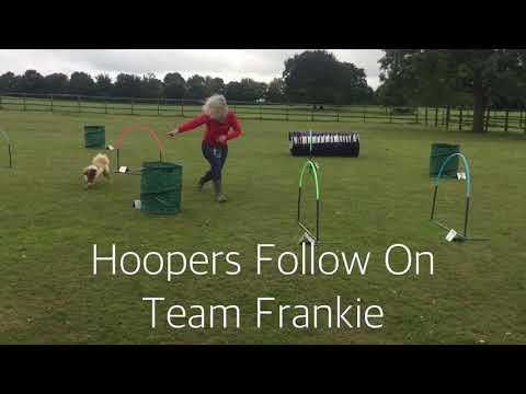 Hoopers dog agility fun!