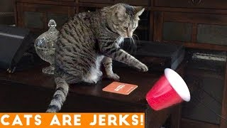 CATS ARE JERKS! Try Not to Laugh - Hilarious Grumpy Cats Compilation April 2018 | Funny Pets Videos