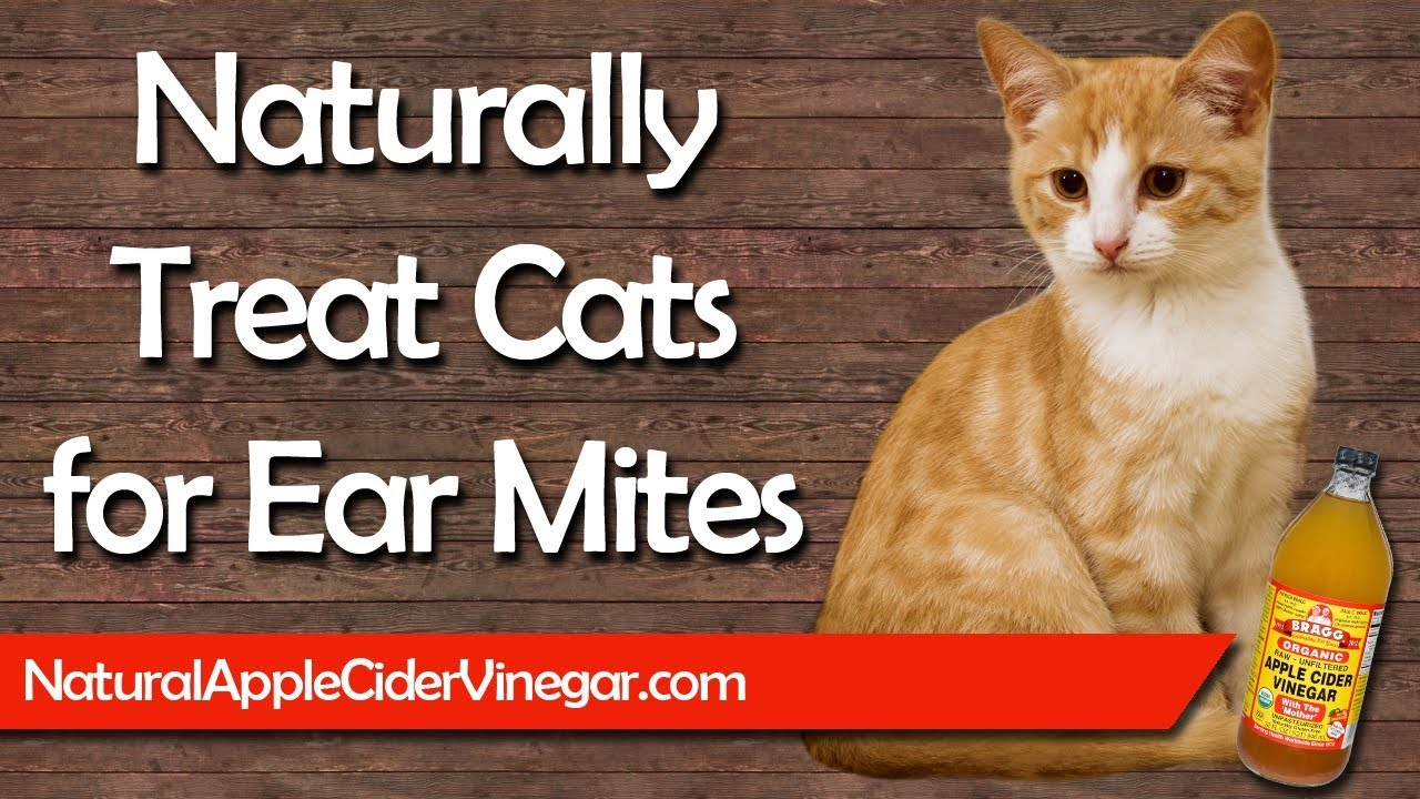 How To Naturally Treat Ear Mites In Cats Youtube