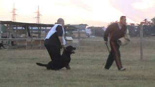 Dante Del Dolce Taro Campionato Rottweiler Club 2011 Nikferre