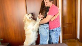 What does a Golden Retriever do when I hug my wife [Jealous Dog Bailey]