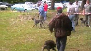Областная выставка охотничьих собак   г Курск 2010 г  ч 2