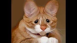 клип-шутка про кошек
