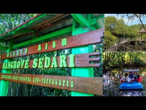 objek-wisata-kawasan-taman-hutan-bakau-magrove-sedari-cikiong-karawang