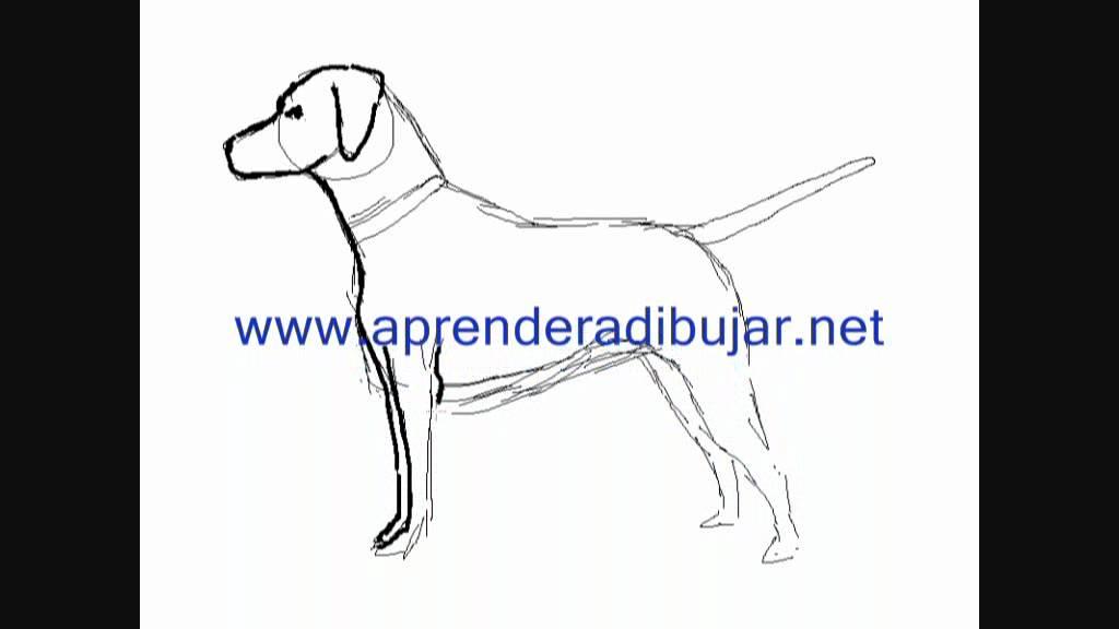 Dibujos de perros : perro Dálmata - Dibujos para Pintar - YouTube
