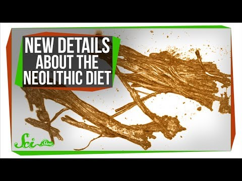 The Neolithic Diet: New Details About What's in the Iceman's Stomach