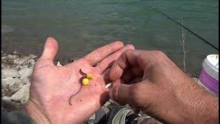 Şamandıra ve Kd Rig Takımla Sazan avı Float fishing and Kd Rig System Çekya 6 Bölüm Part 1