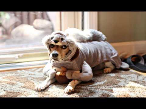 Beagle Mania Halloween Costumes - Ghost Busters- Karaoke