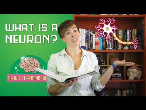 What is a neuron?