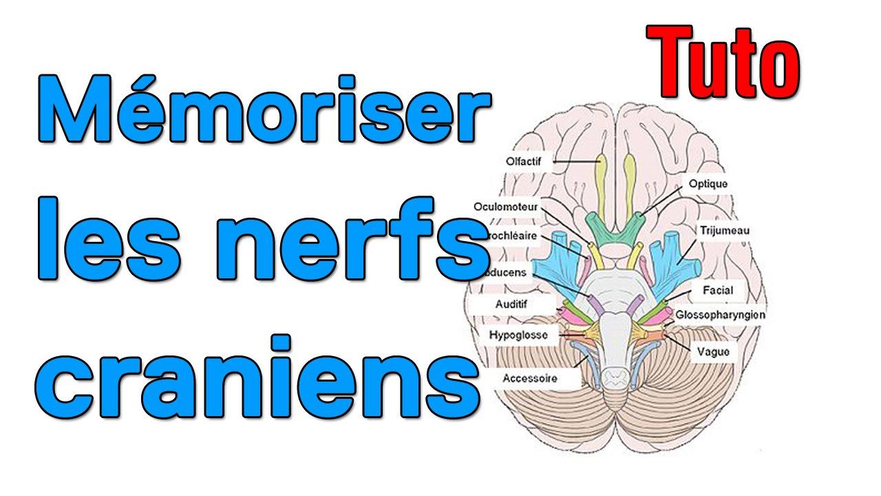 Mémoriser les nerfs craniens - YouTube