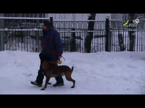 Команда рядом, мотивация и возможность исправления ошибок в работе собаки