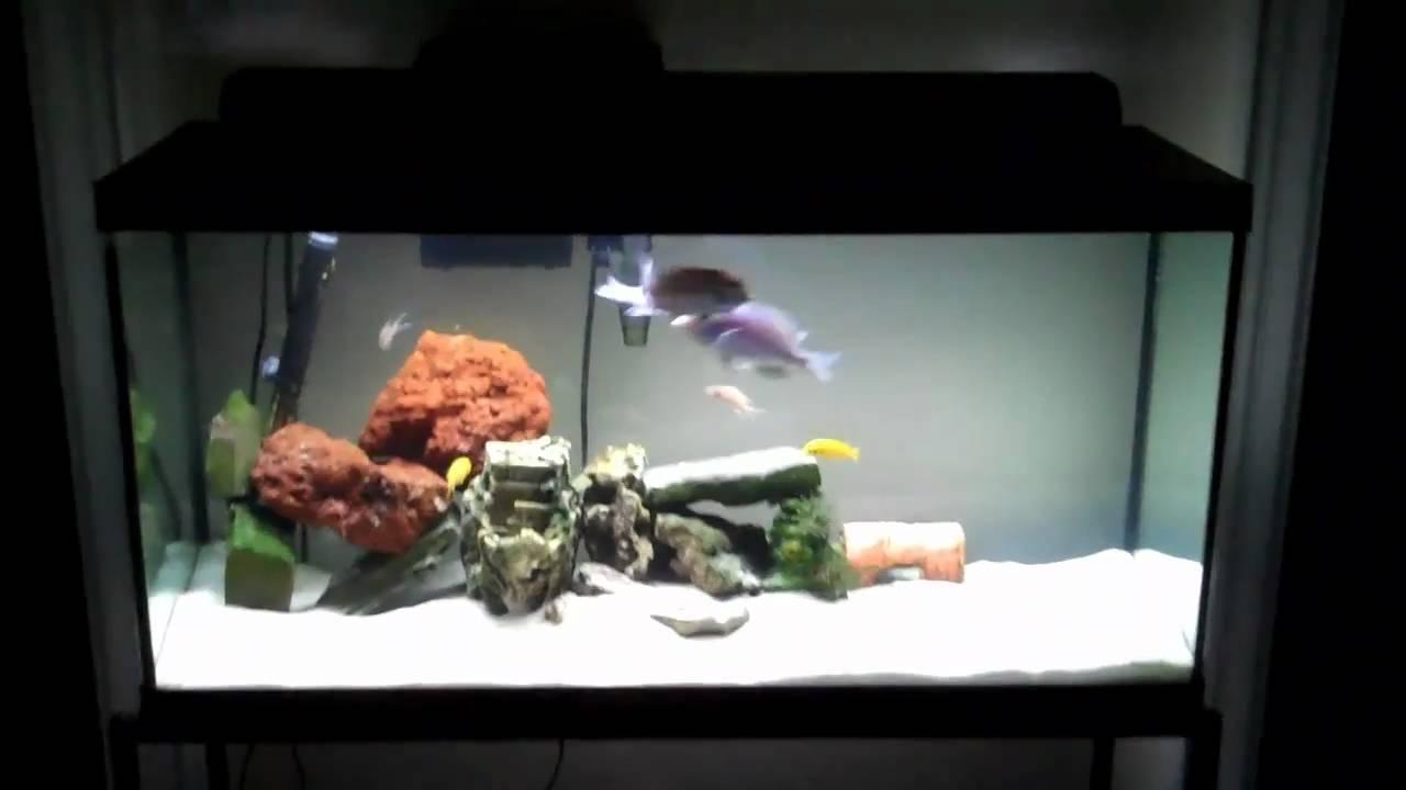 Sunken Ship Theme Aquarium Cichlid Tank Youtube