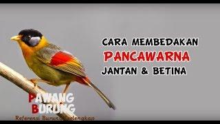 Gambar cover CIRI BURUNG PANCAWARNA JANTAN & BETINA