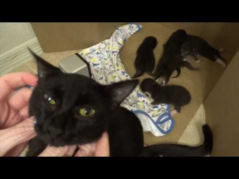 Mother Cat Raven's Best Day Ever! Amazon Wish Granted!