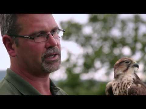 Vidéo Sur La Route Des Vins (Canada) (montage 10')