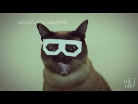 DUBSTEPOWY KOT co ja pacze 2012 FUNNY DANCING CAT HIPSTER DUBSTEP SKRILLEX UKF