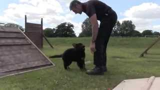 Billy At Police Dog Training