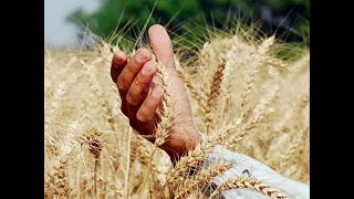 Cabinet approves MSP hikes for 6 rabi crops