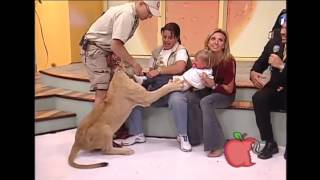 Lew atakuje dziecko na wizji.