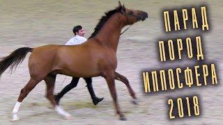 Фото Парад Пород   Разные породы лошадей Конная выставка Иппосфера 2018 Hipposphere