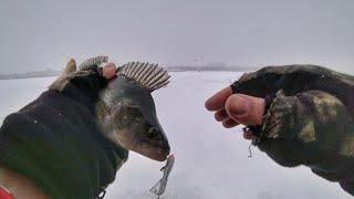 Трудовая рыбалка 2020 Разловил блесну Ловля окуня на балансир