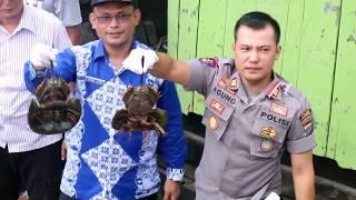 Penyelundupan Ribuan Ekor Blangkas Berhasil Digagalkan