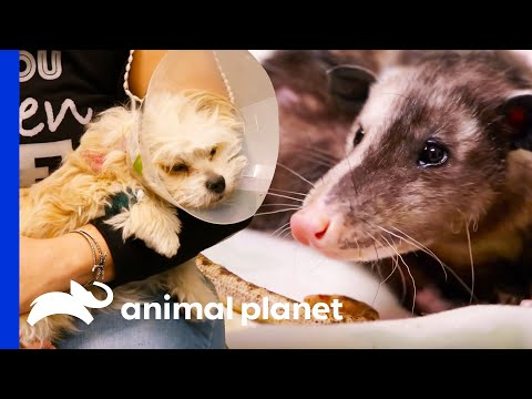 Check Out These Amazing Medical Moments!   The Vet Life