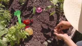 How To Grow An Organic Vegetable Garden: Episode 3 Seeds And Transplants