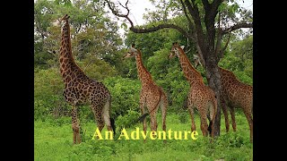 Traveling to Fathala Wildlife Reserve/Senegal: with THE DEE'S