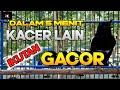 Suara Ngotot Kacer Gacor Ngeplong Merangsang Kacer Malas Bunyi Cepat Gacor  Mp3 - Mp4 Download