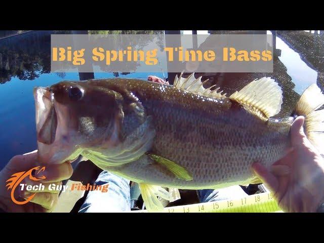Kayak Fishing for BIG Bass! Spring Creek Nature Preserve