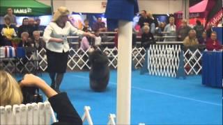 Fri 03/16/12 Louisville Kennel Club Best In Show