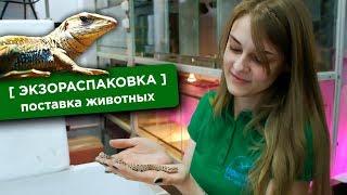 Поставка животных в EXOMENU! [ЭКЗОРАСПАКОВКА]