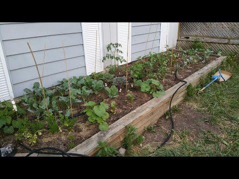 Tiny Urban Farm Update