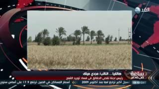 تقصى القمح: إعلان أسماء المتورطين فى الفساد قريبا .. فيديو