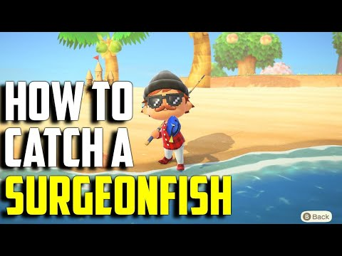 How To Catch A Surgeonfish | Surgeonfish ACNH | Animal Crossing New Horizons Surgeonfish