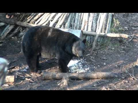 Hunt Record Book Black Bears with Mikes Outfitting Black Bear Hunting in Alberta Canada